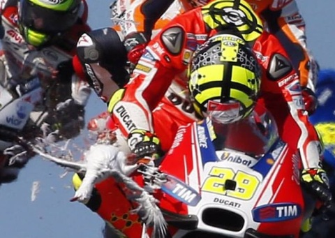 iannone n sea gull2